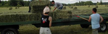 Offerta Digitale per Imprenditori Agricoli